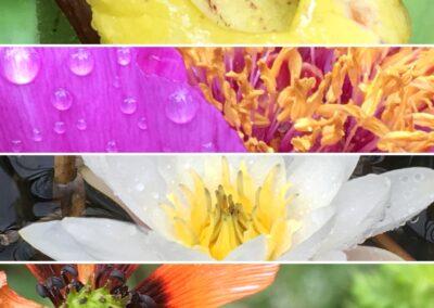 Découverte de la Flore du Briançonnais, de la Clarée et du Queyras- Du 9 au 13 juin 2021